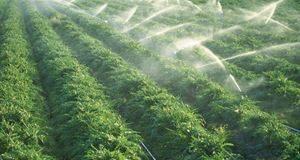 Imagem campo irrigado Atibaia